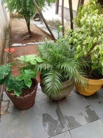 Plantas a partir de 50 reais ate mil reais a unidade