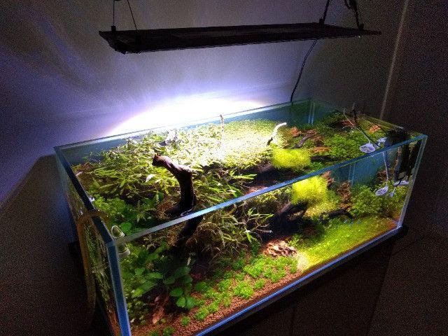 Aquário Plantado - Foto 3