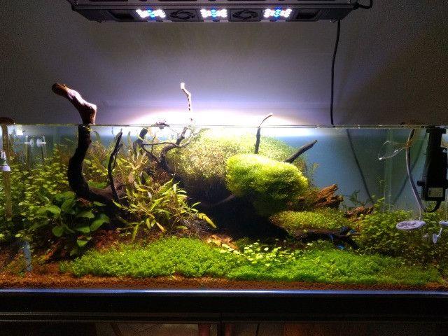Aquário Plantado - Foto 4