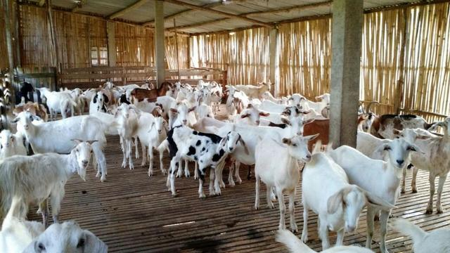 Fazenda em Paraibuna - Foto 17