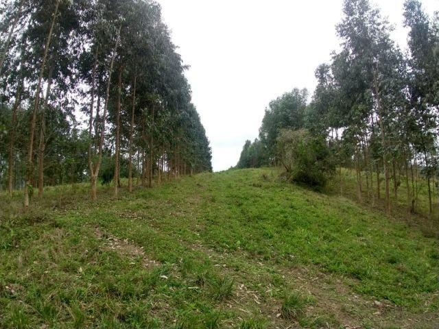 Fazenda em Campo Largo Bairro São Silvestre - Foto 12
