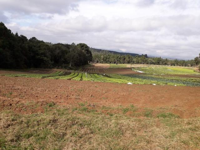 Chácara com 39.631m2 em Campina Grande do Sul - Aceito Imóvel Com Volta - Foto 20
