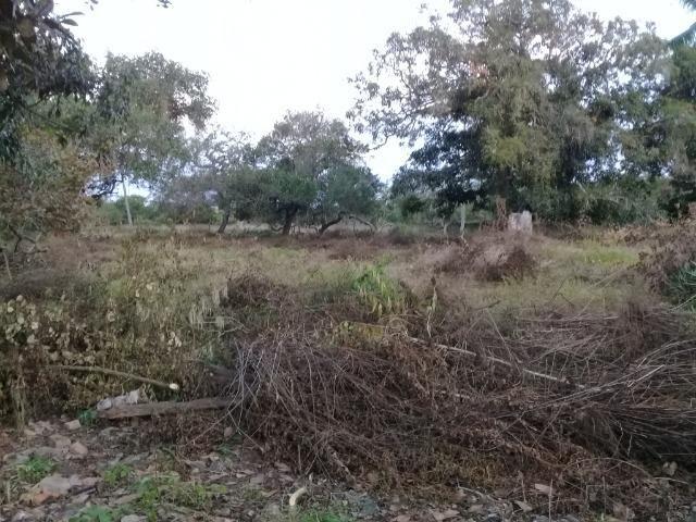 Excelente área de terra no povoado de boa hora, próximo ao parque viver tomba - Foto 14