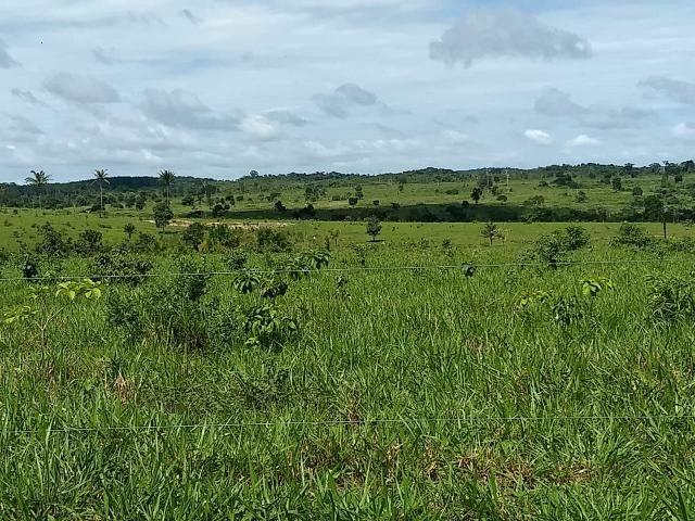Fazenda em Parecis - RO. 4.000 hectares - Foto 8
