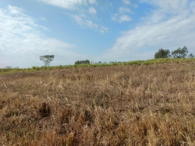 Alugo Fazenda p Arrendamento no Ms 1000 há - Foto 19