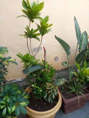 Plantas a partir de 50 reais ate mil reais a unidade - Foto 5