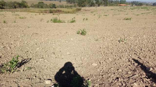 Fazenda, Sítio, Chácara, para Venda em Porangaba com 72.600m² 3 Alqueres, Plano, Limpo, 10 - Foto 4