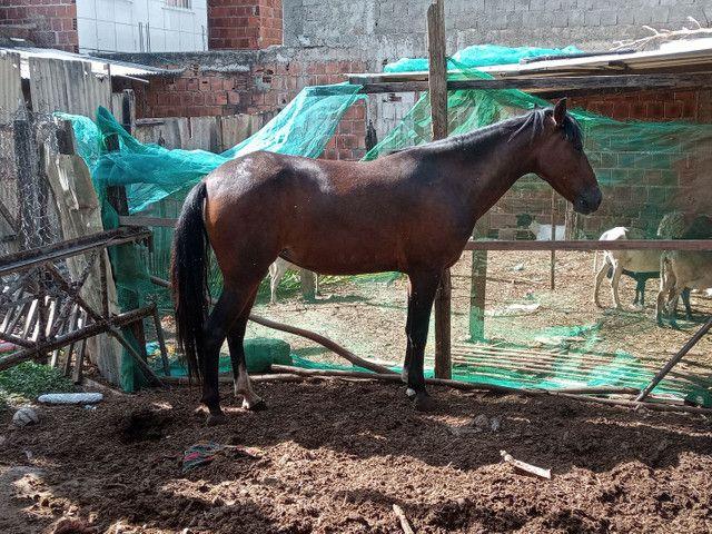 Égua - Foto 3
