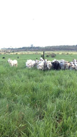 Fazenda de 606 hectares, S. Joao da Baliza De porteira fechada. ler descrição do anuncio - Foto 9
