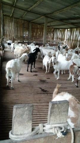Fazenda em Paraibuna - Foto 12