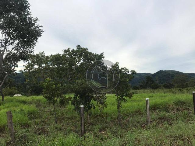Sítio 11,8 ha na região distrito da guia - Foto 9