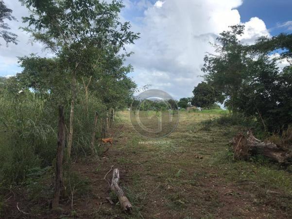 Sítio 11,8 ha na região distrito da guia - Foto 14