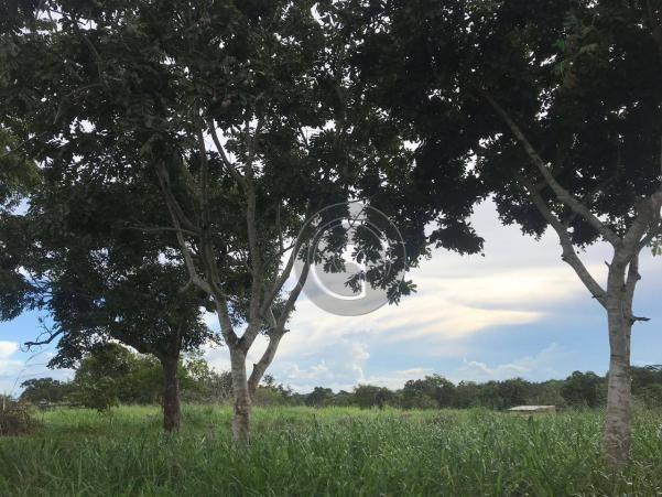 Sítio 11,8 ha na região distrito da guia - Foto 3