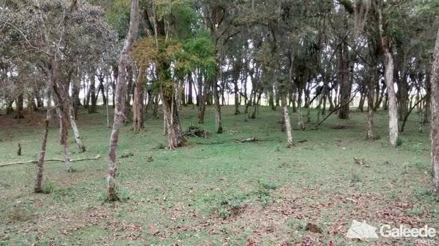 Chacara|Área com 60.000m² em São José dos Pinhais - Foto 12