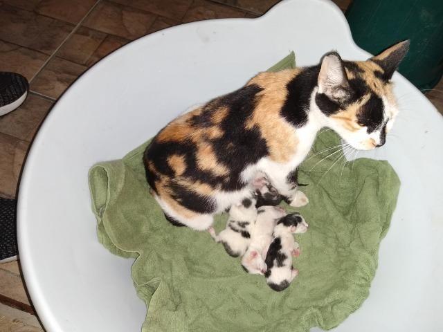 Gata com seus oitos filhotes recém nascidos