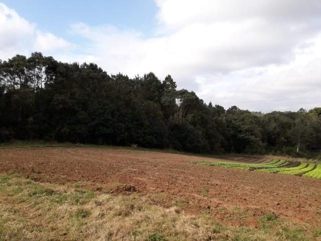 Chácara com 39.631m2 em Campina Grande do Sul - Aceito Imóvel Com Volta - Foto 3
