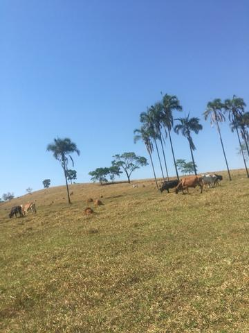 Fazenda caruru Valor R$ 1,400,000 - Foto 19