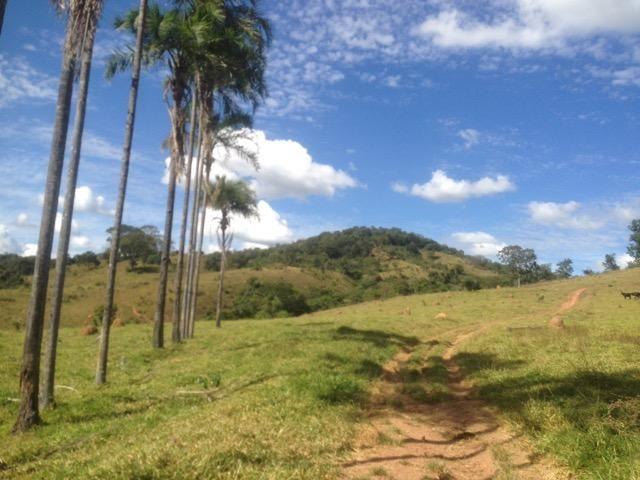 Fazenda caruru Valor R$ 1,400,000 - Foto 8