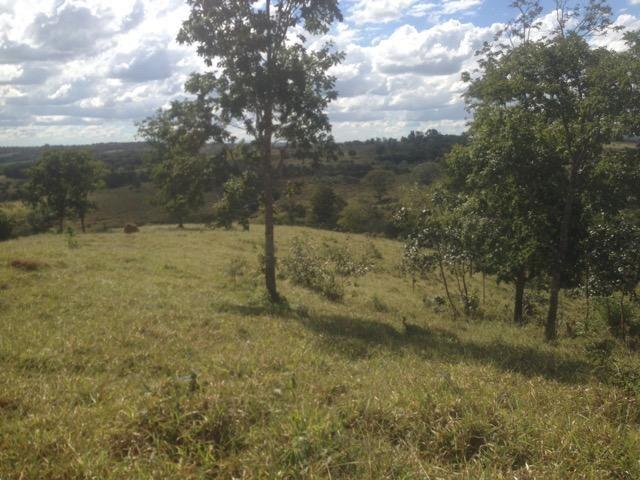 Fazenda caruru Valor R$ 1,400,000 - Foto 6