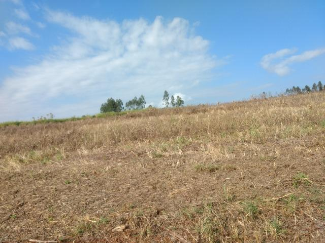Alugo Fazenda p Arrendamento no Ms 1000 há - Foto 18