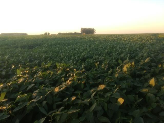 Alugo Fazenda p Arrendamento no Ms 1000 há - Foto 8
