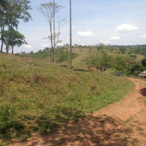 Fazenda caruru Valor R$ 1,400,000 - Foto 14