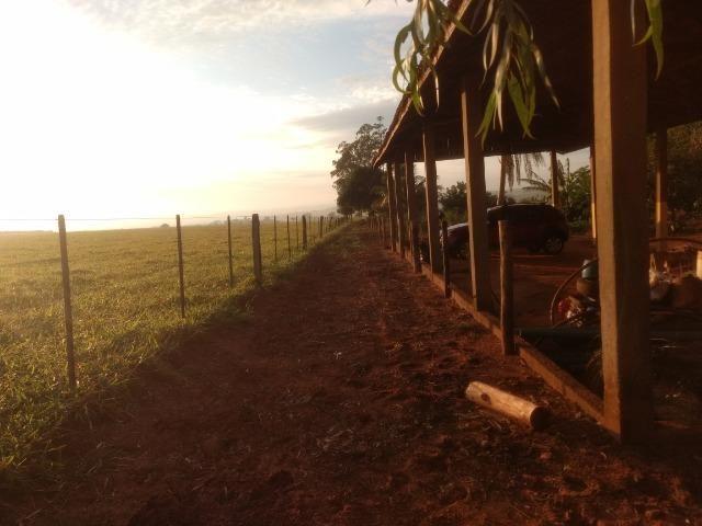 Alugo Fazenda p Arrendamento no Ms 1000 há - Foto 13
