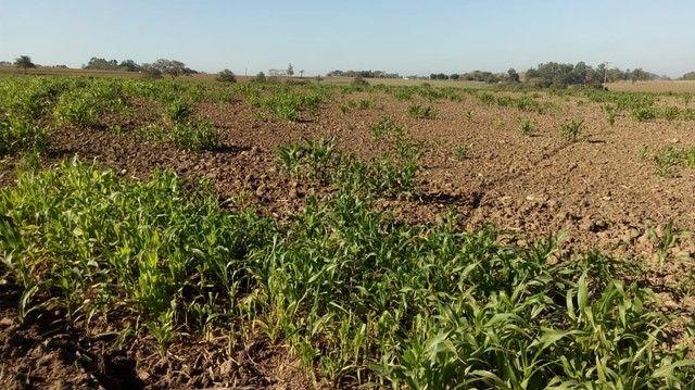 Fazenda, Sítio, Chácara, para Venda em Porangaba com 72.600m² 3 Alqueres, Plano, Limpo, 10 - Foto 7