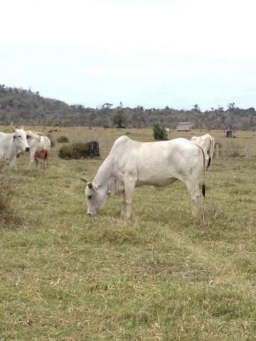 Fazenda de 606 hectares, S. Joao da Baliza De porteira fechada. ler descrição do anuncio - Foto 2