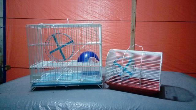 2Gaiolas pr roedores