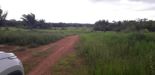 fazenda top em roraima - vila moderna