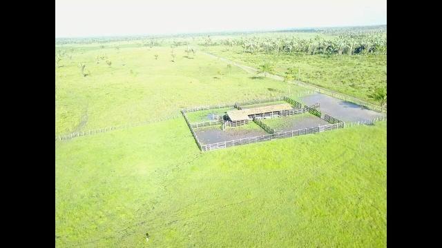 Oportunidade Única - Vendo Fazenda 1000 ha - Foto 2