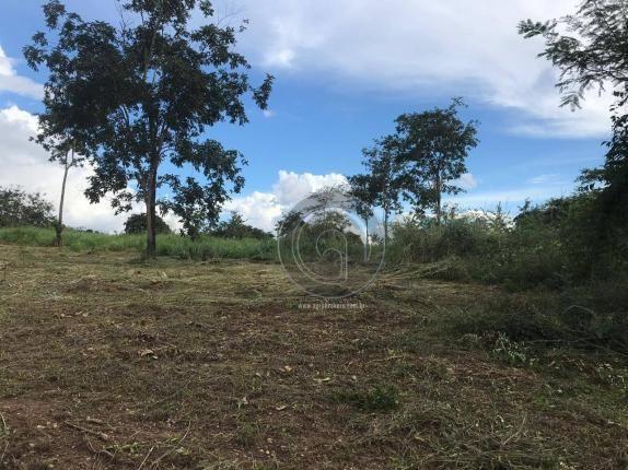 Sítio 11,8 ha na região distrito da guia - Foto 11