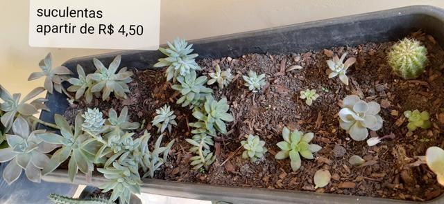 Mudas de hortaliças, e suculentas plantas em geral - Foto 4