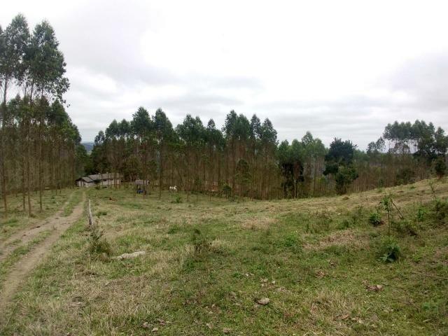 Fazenda em Campo Largo Bairro São Silvestre - Foto 3