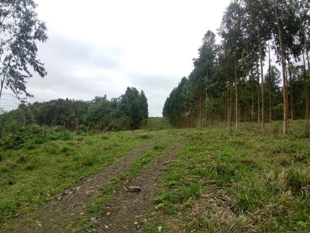 Fazenda em Campo Largo Bairro São Silvestre - Foto 11