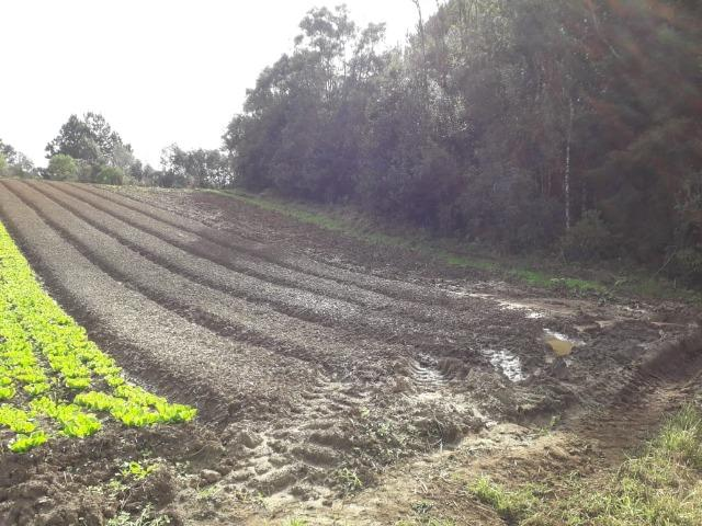 Chácara com 39.631m2 em Campina Grande do Sul - Aceito Imóvel Com Volta - Foto 8