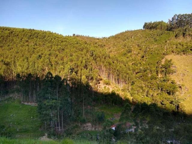 Fazenda TOP - Com eucalipto - Interior de SP - Foto 2