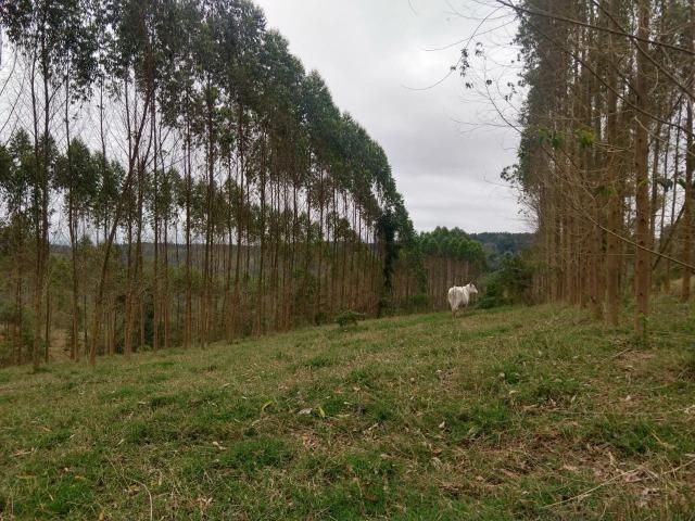 Fazenda em Campo Largo Bairro São Silvestre - Foto 10