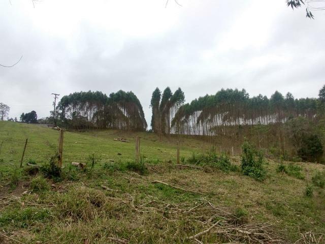 Fazenda em Campo Largo Bairro São Silvestre - Foto 2