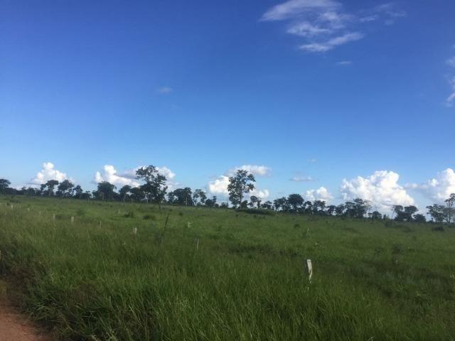 Fazenda 10593 hectares, sendo 7370 formado, terra de cultura - Foto 5