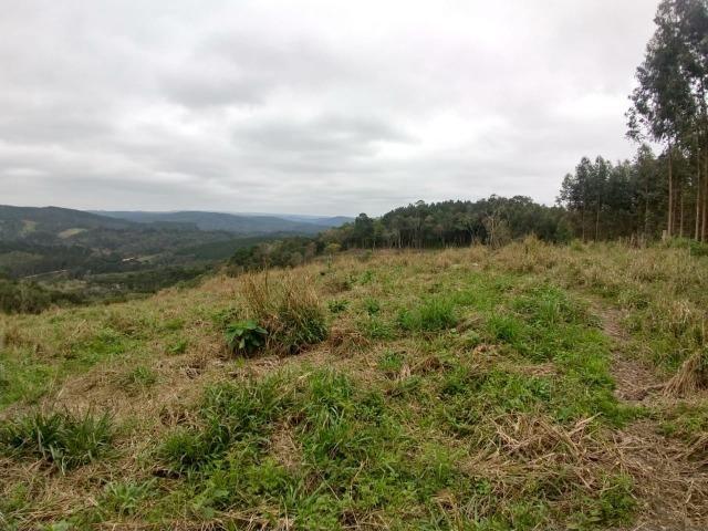 Fazenda em Campo Largo Bairro São Silvestre - Foto 8