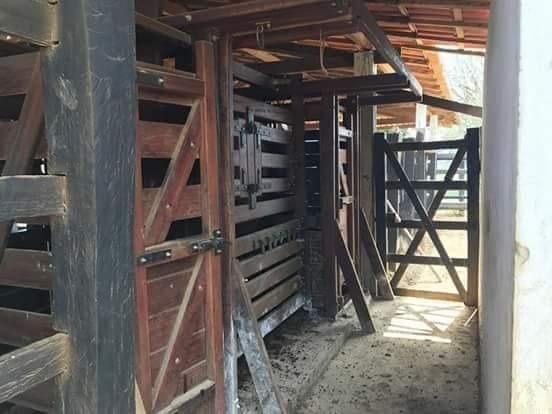 Maravilhosa fazenda com casa nova de 3/4, curral, tronco, embarcador, balança e aprisco - Foto 3