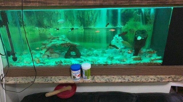 Vendo aquário completo  - Foto 2
