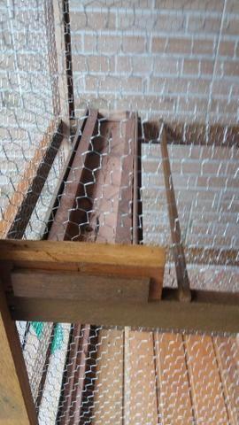 Viveiros para passarinho, coelhos, galo, galinha, porquinho da índia, etc - Foto 2