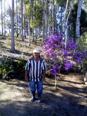 Chacara Vana - Foto 3