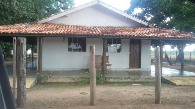 Fazenda de 16.250 Alqueires Paulista, Na Região de Confresa MT - Foto 4