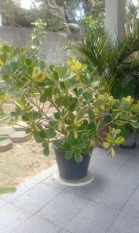 A venda Plantas - Foto 4