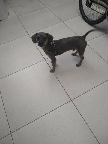 Adoção de cachorro - Foto 3