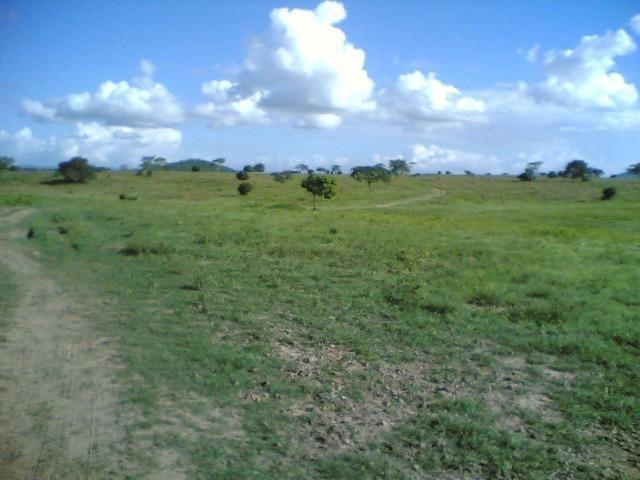 Cumaru=Vend. 15 mil p-Hect. Fazenda =Casa,Energia,Água,Piscina e muito mais - Foto 8